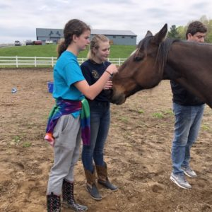 Therapeutic_Horses_of_Saratoga_Volunteers_01